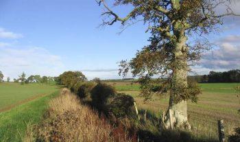Classic Hedge & Ditch Boundary Scenario